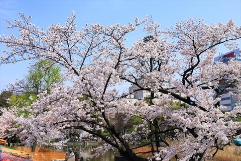 UenoOnshiKouen2014Spring18_R