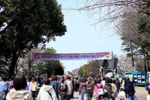 UenoOnshiKouen2014Spring01_R