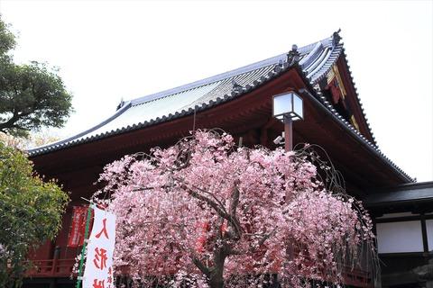 UenoOnshiKouen2014Spring12_R