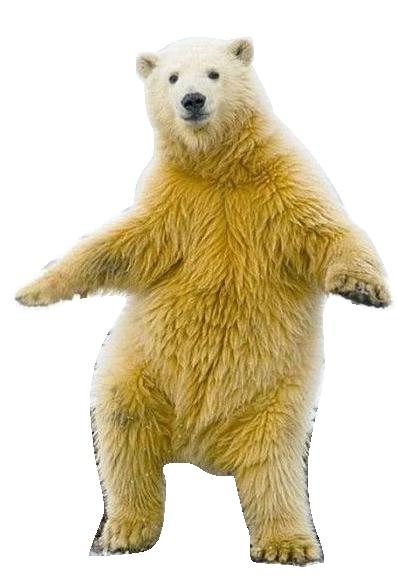 クマの画像 p1_38