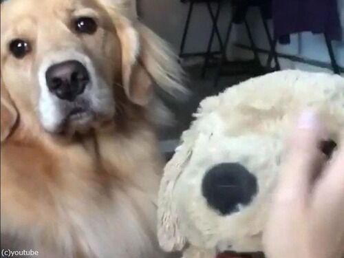 「犬のぬいぐるみをかわいがっていたら…愛犬が嫉妬した」
