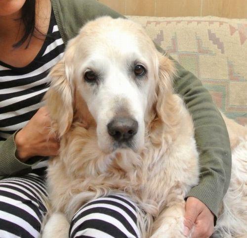 【社会】放置された犬を保護して飼育 3カ月後に遺失物届出、返還要求 裁判に発展 「年老いた犬と平穏に暮らしたい」