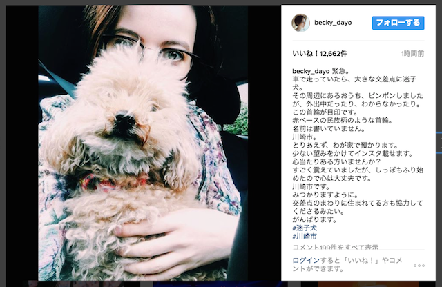 【エンタメ画像】【これは怪しい】ベッキー、迷い犬保護のお手柄にも「復帰アピール疑惑」ってよ!!!!!!!!!!!!!!!!