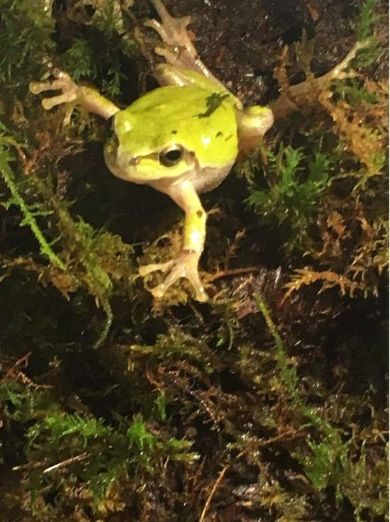 【画像】ワイのカエル、かわいいwww