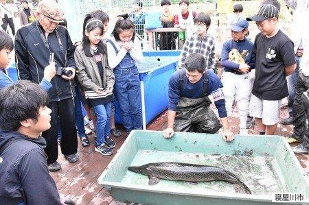 テレ東「池の水ぜんぶ抜く」で巨大肉食魚アリゲーターガー発見!大阪・寝屋川山新池