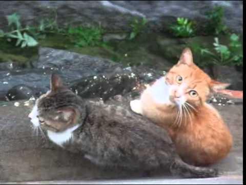 【悲報】野良猫に餌やり系ユーチューバー、台風の河原に猫を放置して流されてしまう