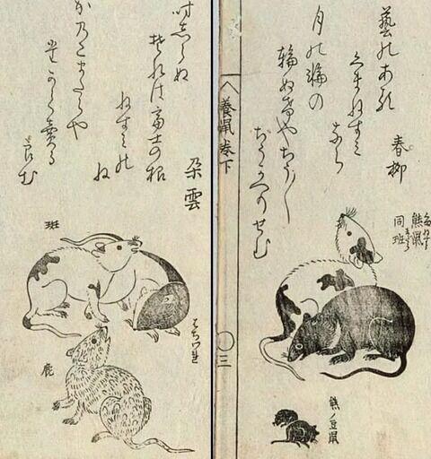 【悲報】江戸時代の日本人さん、ドブネズミの美しさでマウントとっていた
