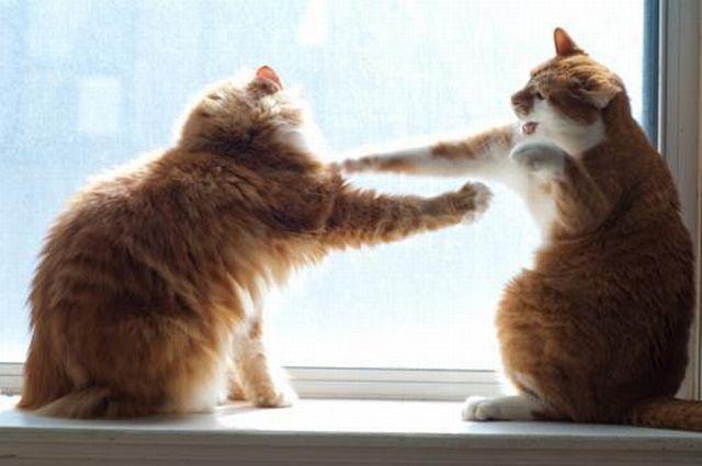 猫が人間に猫パンチしても本気で爪出してないだけで出してたら人間も大きなダメージ食うwwwwwww