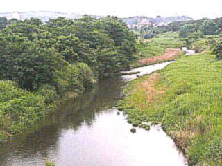 ニセアカシア河畔林松枝橋20090704P1740679
