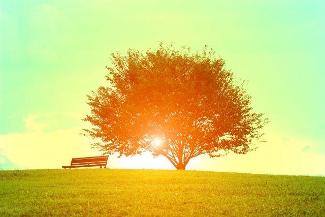 0223_草原の朝