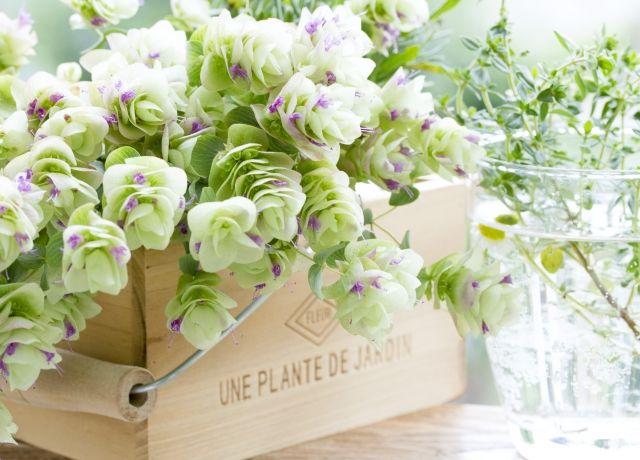 0311_窓辺の植物