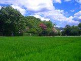 田圃の向こうに落柿舎
