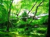 緑に囲まれて祇王寺