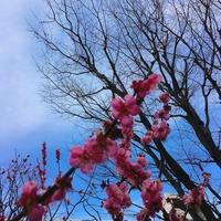 写真 2017-03-04 14 00 52