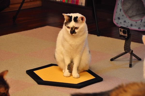 猫転送装置 置き畳