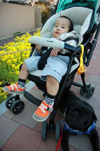 20110406柏尾川散歩IMG_8261