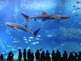 水族館でありがちな事