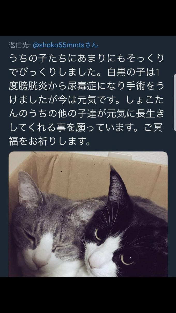 kichi2