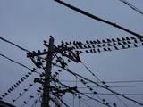 家の前の電線がヤバイ4