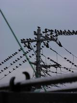家の前の電線がヤバイ