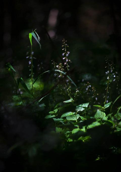 JessicaGrehan-NightShade