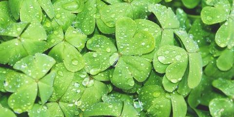 Health_Green