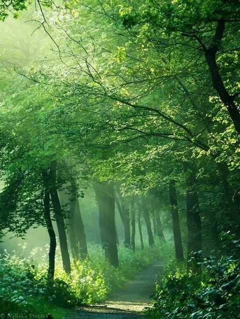 Forest_ThinPlace