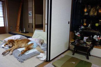 寝たきり4