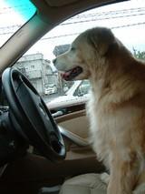 ドライブ?