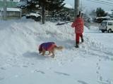 雪かき応援団