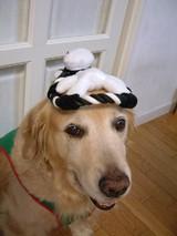 お帽子じゃないよ〜。