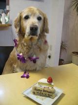 やっとケーキ2