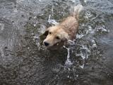 アイちゃんも泳いだのよ2