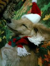サンタさん待っているでちゅ
