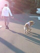 パパRと散歩