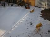 雪が積もったお庭。
