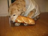 フランスパンちゃん