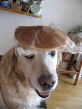 新しいお帽子