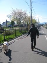 パパRとお散歩