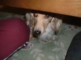 テーブルの下からも・・・