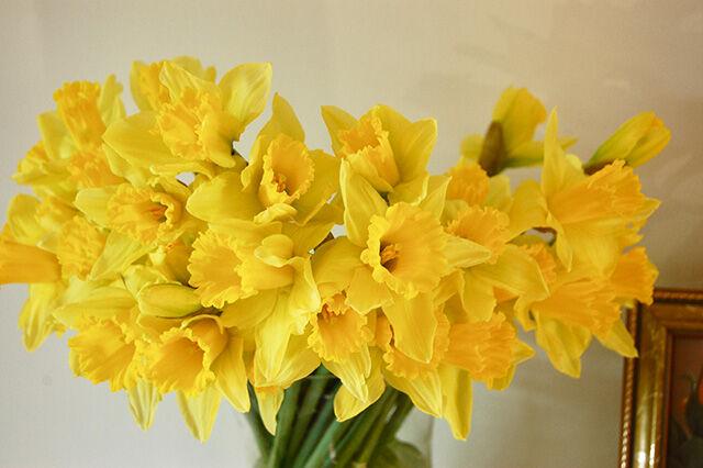 20170216_Daffodil31