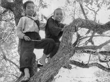 「風の又三郎」1957�