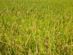20130917稲