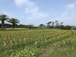 菜の花ガーデン7月24日②