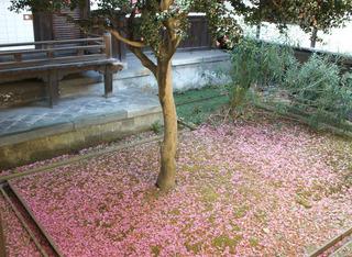 サザンカの庭51