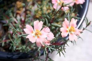 夏の花101