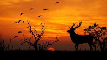 Deer-sunset