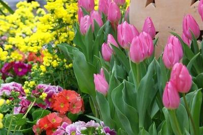 春のチューリップ 005