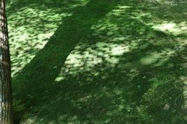 銀閣寺 苔の庭