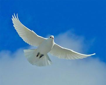 dove-beautiful